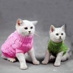 cat sweater costumes